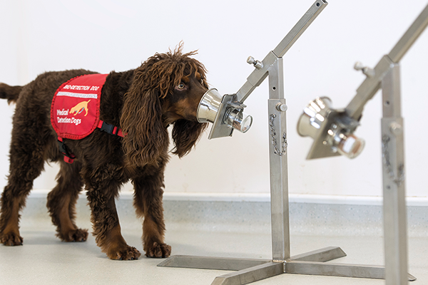Medical dogs being trained for coronavirus detection trial